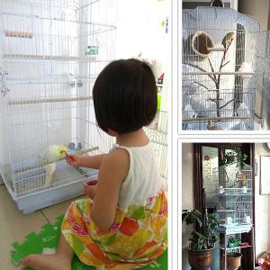 Aeon hum 鳥ケージ 豪華ケージ 鳥かご 3段階 大きいケージ インコ オウムケージ オカメ セキセイ ボタン コガネメキシコ コザク
