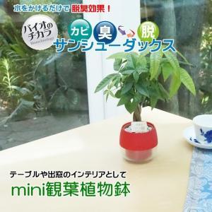 送料無料!観葉植物鉢 12鉢入り|jp878