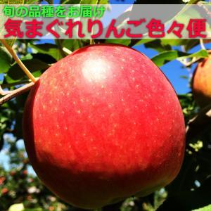 【青森県産】「気まぐれりんご色々便」〜旬の品種を詰め合わせ〜(3キロ箱)|jpn-apple-fan