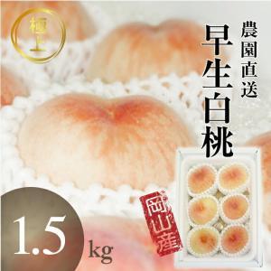 岡山白桃 今井名人の早生白桃 6玉...