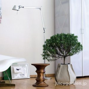 インテリア 鉢 室内 プランター 布鉢  水受け不要  観葉植物 「ファブリックプランター Mサイズ」 水量計付き 布製植木鉢|juicygarden|02