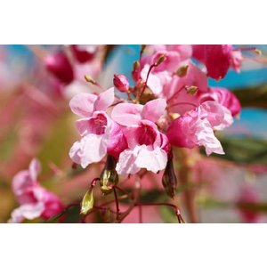 Spring Blossom(アロマ/フレグランス/スティック/ディフューザ/香り/芳香剤/ジュリア/インテリア/ノーブルスパーク/エセンス) julia
