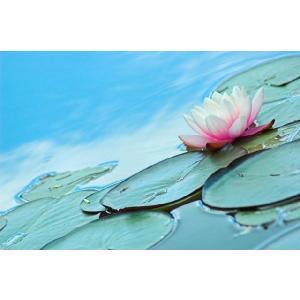 Aqua Lily(アロマ/フレグランス/スティック/ディフューザ/香り/芳香剤/ジュリア/インテリア/ノーブルスパーク/エセンス) julia