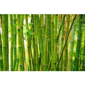 Bamboo(アロマ/フレグランス/スティック/ディフューザ/香り/芳香剤/ジュリア/インテリア/ノーブルスパーク/エセンス) julia