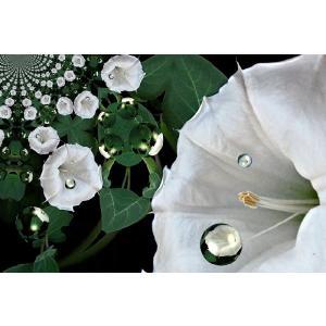 Angel Flower(アロマ/フレグランス/スティック/ディフューザ/香り/芳香剤/ジュリア/インテリア/ノーブルスパーク/エセンス) julia