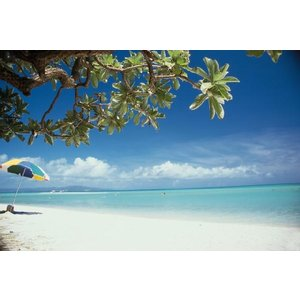 Ocean Mist(アロマ/フレグランス/スティック/ディフューザ/香り/芳香剤/ジュリア/インテリア/ノーブルスパーク/エセンス) julia