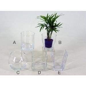 リトル苗+ガラス鉢セット 観葉植物/ハイドロカルチャー/水耕栽培/インテリアグリーン|julli