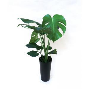 10.5cmL 土苗 観葉植物/インテリアグリーン|julli