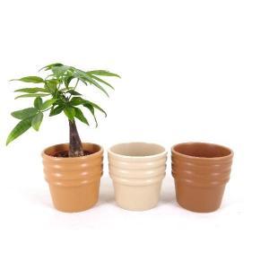 ハイミニショコラ 3号苗 観葉植物/ハイドロカルチャー/水耕栽培/インテリアグリーン|julli