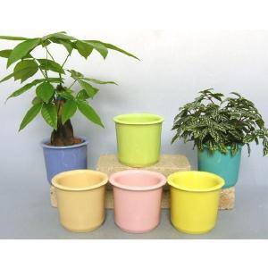 ハイミニパステル 3号苗 観葉植物/ハイドロカルチャー/水耕栽培/インテリアグリーン|julli