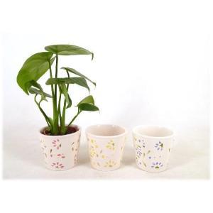ハイミニフルール 3号苗 観葉植物/ハイドロカルチャー/水耕栽培/インテリアグリーン|julli