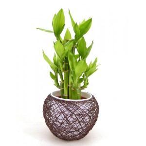 麻ボールL 茶 ミリオンバンブー 水位計付き 送料無料 ギフトにおすすめ|julli