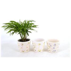 キュートフルール 2号苗 観葉植物/ハイドロカルチャー/水耕栽培/インテリアグリーン|julli