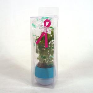 リトルビビ12個セット ギフトパック 送料無料 1.5号苗 観葉植物/ハイドロカルチャー/水耕栽培/インテリアグリーン|julli