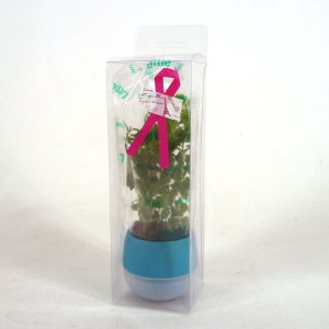 リトルビビ ギフトパック 1.5号苗 観葉植物/ハイドロカルチャー/水耕栽培/インテリアグリーン|julli