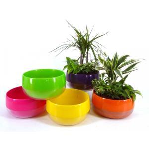アレンジビビ ハイドロコーン植え 観葉植物/ハイドロカルチャー/水耕栽培/インテリアグリーン|julli