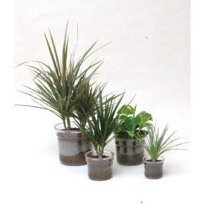i−pot120 ハイドロコーン植え 観葉植物/ハイドロカルチャー/水耕栽培/インテリアグリーン|julli