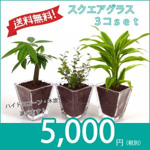 【送料無料】スクエアグラス 3コセット ハイドロコーン植え 炭植え 観葉植物/ハイドロカルチャー/水耕栽培/インテリアグリーン|julli