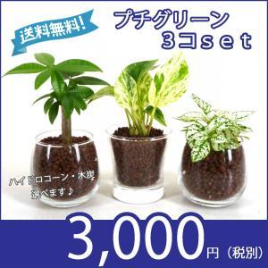 【送料無料】プチグリーン 3コセット ハイドロコーン植え 炭植え 観葉植物/ハイドロカルチャー/水耕栽培/インテリアグリーン|julli