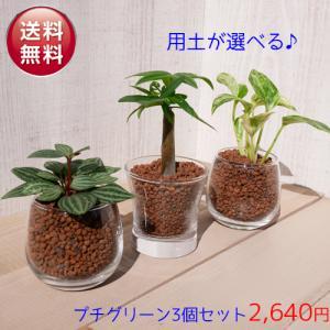 【送料無料】プチグリーン 3コセット ハイドロコーン植え 炭植え 植物おまかせセット 観葉植物/ハイ...