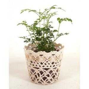 レースポットM ハイドロコーン植え 観葉植物/ハイドロカルチャー/水耕栽培/インテリアグリーン|julli