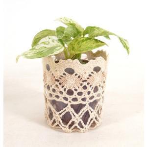 レースポットS ハイドロコーン植え 観葉植物/ハイドロカルチャー/水耕栽培/インテリアグリーン|julli