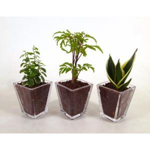 GブロックS スクエア 3個セット ハイドロコーン植え 観葉植物/ハイドロカルチャー/水耕栽培/インテリアグリーン|julli