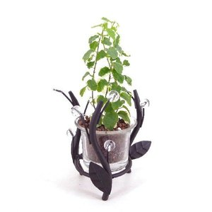 フォレストライト ハイドロコーン植え 観葉植物/ハイドロカルチャー/水耕栽培/インテリアグリーン|julli