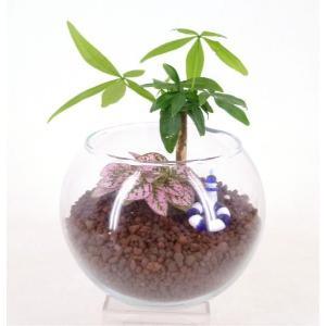 ハイドロコーン植え 作成キット 小バルーン テラリウム 観葉植物/ハイドロカルチャー/水耕栽培/インテリアグリーン|julli