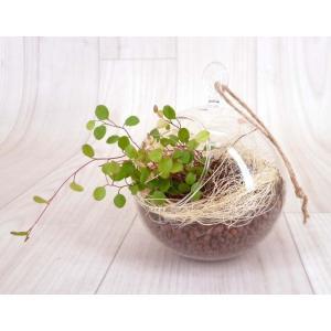 ハンギングガラス ハイドロコーン植え 観葉植物/ハイドロカルチャー/水耕栽培/インテリアグリーン|julli