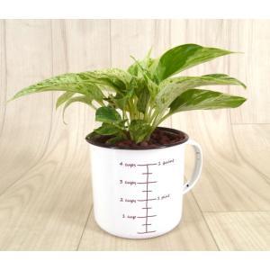ホーローマグ 水位計つき ハイドロコーン植え 観葉植物/ハイドロカルチャー/水耕栽培/インテリアグリーン|julli