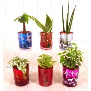 プチカップ セラミス植え 観葉植物/ハイドロカルチャー/水耕栽培/インテリアグリーン|julli