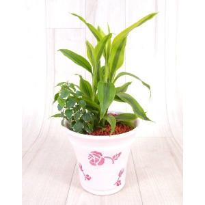 ローズポットL セラミス植え 観葉植物/ハイドロカルチャー/水耕栽培/インテリアグリーン|julli