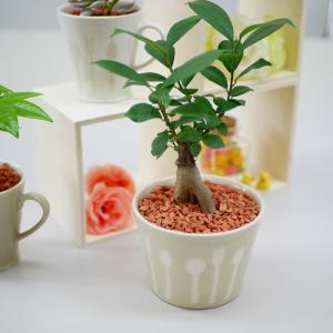 カトラリーボールM 単品 セラミス植え 観葉植物/ハイドロカルチャー/水耕栽培/インテリアグリーン|julli
