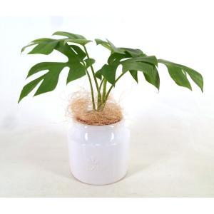 ヨークポットL セラミス植え 観葉植物/ハイドロカルチャー/水耕栽培/インテリアグリーン|julli