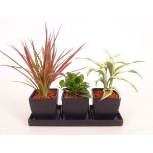 オードリー トリプル 皿つき 角 セラミス植え 観葉植物/ハイドロカルチャー/水耕栽培/インテリアグリーン|julli