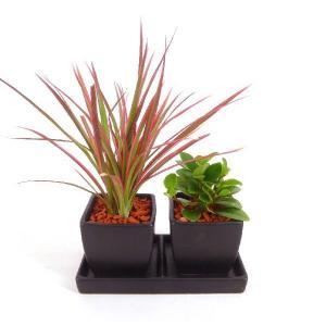オードリー ダブル 皿つき 角 セラミス植え 観葉植物/ハイドロカルチャー/水耕栽培/インテリアグリーン|julli