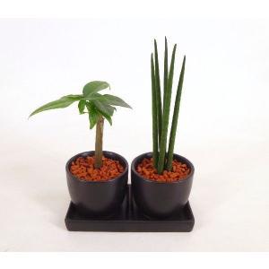 オードリー ダブル 皿つき 丸 セラミス植え 観葉植物/ハイドロカルチャー/水耕栽培/インテリアグリーン|julli