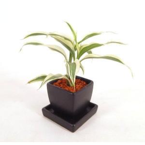 オードリー シングル 皿つき 角 セラミス植え 観葉植物/ハイドロカルチャー/水耕栽培/インテリアグリーン|julli