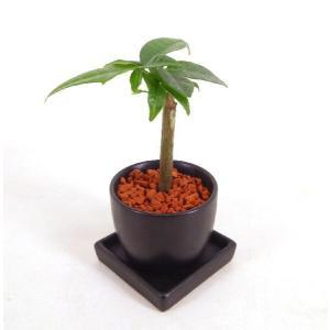 オードリー シングル 皿つき 丸 セラミス植え 観葉植物/ハイドロカルチャー/水耕栽培/インテリアグリーン|julli