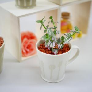 カトラリーカップ セラミス植え 観葉植物/ハイドロカルチャー/水耕栽培/インテリアグリーン|julli