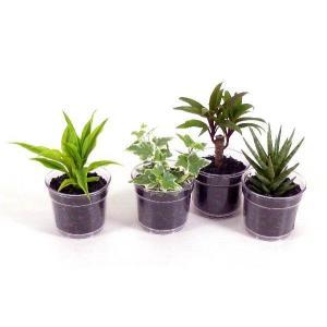 i−pot120 炭植え 観葉植物/ハイドロカルチャー/水耕栽培/インテリアグリーン|julli
