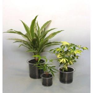 クリア110 炭植え 観葉植物/ハイドロカルチャー/水耕栽培/インテリアグリーン|julli