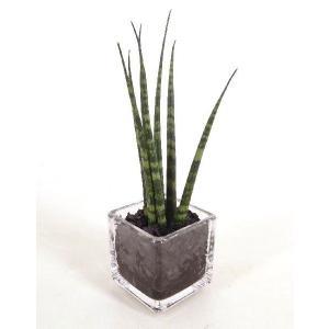 キュービックSS シングル 皿なし 炭植え 観葉植物/ハイドロカルチャー/水耕栽培/インテリアグリーン|julli