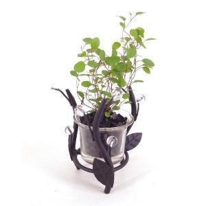 フォレストライト  炭植え 観葉植物/ハイドロカルチャー/水耕栽培/インテリアグリーン|julli