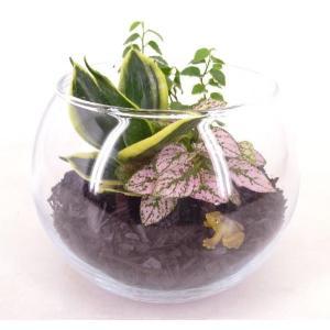 炭植え 作成キット テラリウム 観葉植物/ハイドロカルチャー/水耕栽培/インテリアグリーン|julli