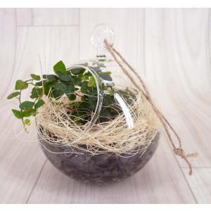 ハンギングガラス 炭植え 観葉植物/ハイドロカルチャー/水耕栽培/インテリアグリーン|julli