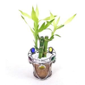 アイアンビーズ エコスギ植え 観葉植物/ハイドロカルチャー/水耕栽培/インテリアグリーン|julli