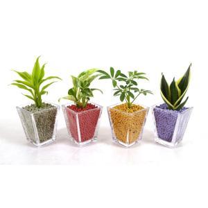 GブロックS スクエア リサコ植え カワラカルチャー 観葉植物/ハイドロカルチャー/水耕栽培/インテリアグリーン|julli