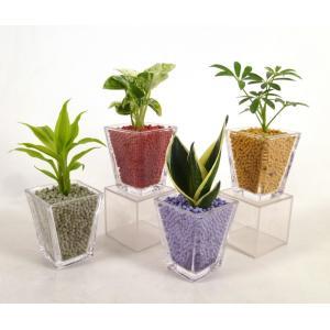 GブロックS スクエア リサコ植え カワラカルチャー 4個セット 観葉植物/ハイドロカルチャー/水耕栽培/インテリアグリーン|julli